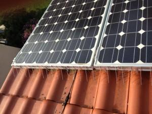 Taubenabwehrspitzen an Solaranlagen